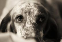 Dogs / by Miranda Parker
