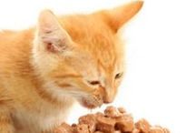 Pet Nutrition / PetTrax is focused on helping pet owners provide nutritious food to their loved furry friends. Check out nutrition information here