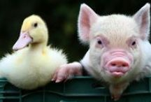Barnyard Buddies aka I'M OBSESSED WITH PIGLETS / by Country Outfitter