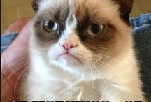 Grumpy cat.  / by Yvonne Salcido
