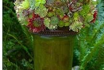 Gardening / by Suzi Clarke