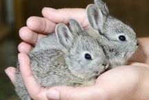 Show me your Buns! / This is about my love of rabbits!  I have two Holland lops and they are so much fun!  So if I see a sweet baby or a clever idea for housing.... it goes here!   / by Debbie Shearer
