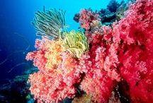 Scuba Diving / by Anna McKenzie