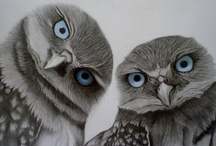 Owls / by Jenn Young