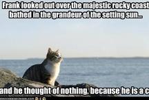 Funny / by Catt Naghibi