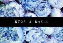 Stop & Smell / by Bite me More