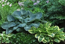 Outdoor spaces and Gardens / by Lisa Causey