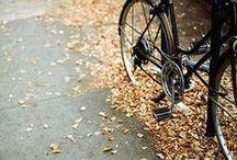Bike / by Tessa Horehled