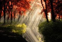 Enchanted... / by Albina