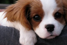 Puppies! / by Peggy Kaatman Paterno