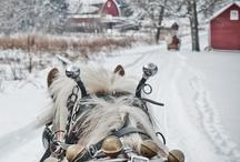 Horses / by Amanda Doukellis