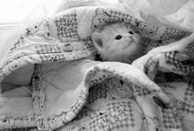 Animals / by Amanda Doukellis