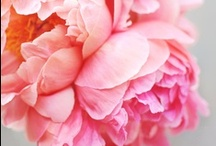 flowers / Flowers make me happy.
