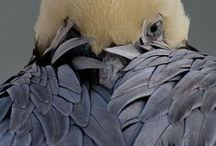 Birds are Awesome... / by Beth Fath