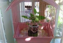 What 2 Do With A BIRDCAGE / These are so pretty decorated with mini-lights or candles, real or silk flowers, or decorated with seasonal accents........ / by Janine