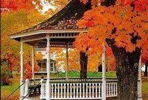 AUTUMN! - What a glorious season! / Definitely my favorite season! / by Donna Griffin-Canada