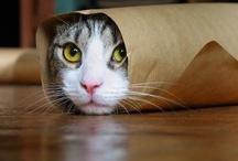 kitty kitty cats / CATS