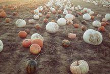 Autumn / Decor ideas for my favorite season.