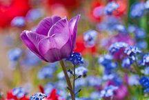 lovely | FLOWERS