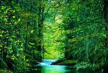 ♥ Nature / Forests, Trees, Beaches, Nature. Time to be in solitude and recharge.
