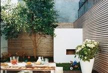 Backyard Breeze / Backyard dreaming...