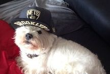 Nets Pets / by Brooklyn Nets
