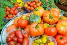 Vegetable & Herb Gardens / Vegetable Garden