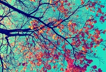 Pretty Things / by Allie Morgan