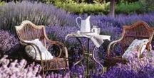 Scented Gardens / Add some scent into your garden, whether its rose, lavender and lilies or thyme, rosemary and mint...