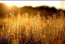 Golden hour / by Inger Temming