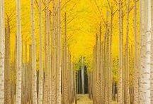 mood | yellow