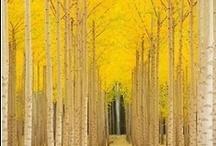 Yellow / by Blake Design