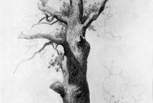 Trees / by Laura Heilman