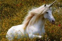 magische eenhoorn\unicorn / by Inger Temming