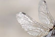 dragonfly / by Inger Temming