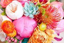 T H E M E ~~ Playful Colors