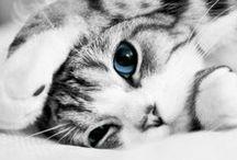 Cutest Cats ;-D