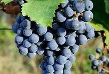 Wine Bliss: WINES + WINERIES