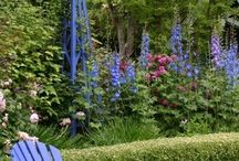 garden / by Marlize Helberg