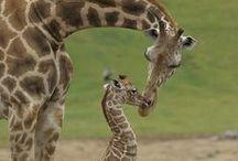 Animals :D / by Jessica Kadinger