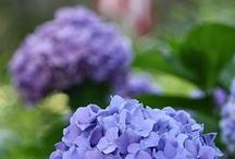 in the garden / by Annie B.