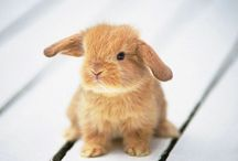 Bunnies and other baubles / Bunnies, lovely sayings, etc