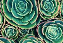 [Gardenparty] / by Taeler Janae Austin Durrant