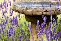 Garden ideas / by Krasimira Georgieva