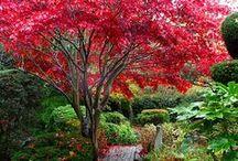 garden / by Tiffany Dahlstrom