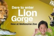 Summer Zoo Adventures 2014/15 / by Zoos Victoria