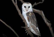 Wild Nights at Werribee Open Range Zoo / by Zoos Victoria