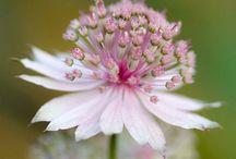 Home - garden flower inspiration