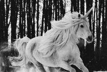 Photographie - surnaturel & fantasy