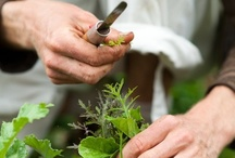 ~ garden, farm & forage ~ /